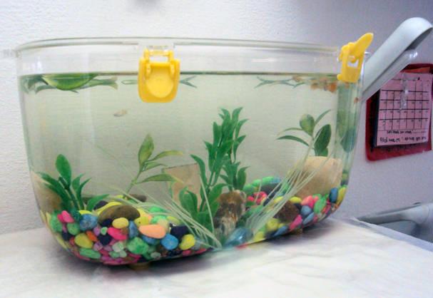 דגים שוברים שתיקה