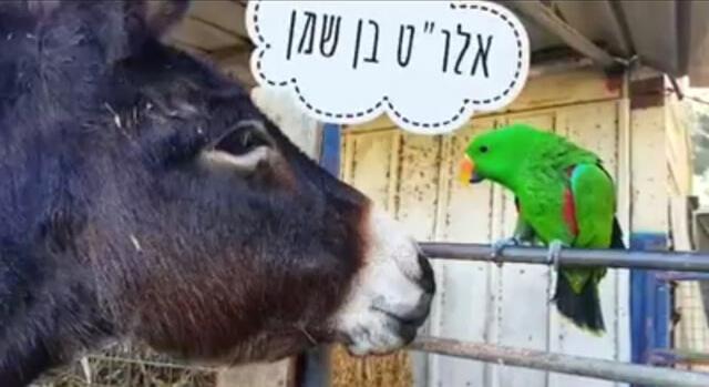 יחסים עם בעלי חיים